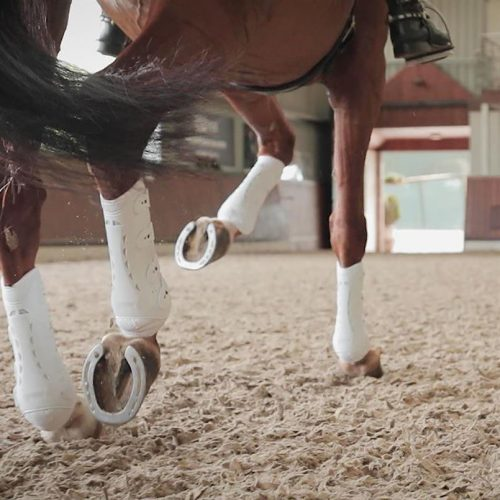 Equestrian sports chain Epplejeck focuses on European growth with Mentha investment